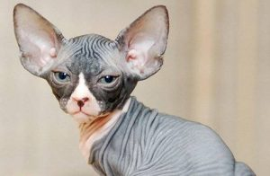 Cat-minsky
