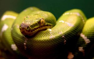 desktop-beautiful-snake-wallpapers-dowload