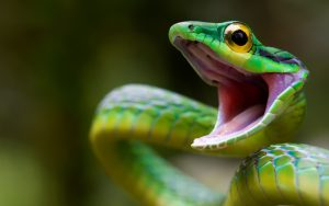 green-snakes-hd-wallpaper