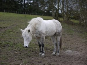 horses.1